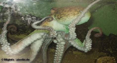 Всемирно известный осьминог-оракул Пауль из немецкого города Оберхаузена исполнит песни Элвиса Пресли. Об этом сообщает […]