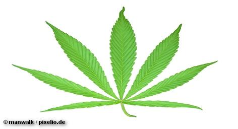 Правительство земли Северный Рейн — Вестфалия увеличило допустимое законом количество легких наркотиков, предназначенных для индивидуального […]