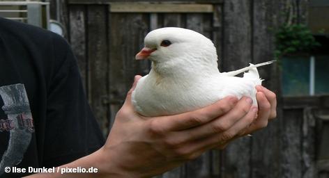 Почтовые голуби доставили флэш-накопители на расстояние 193 км быстрее, чем пользователи загрузили из Интернета видеоролик […]