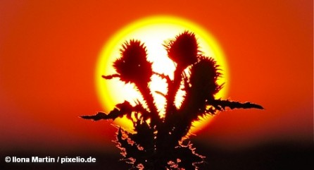 Анджелесе Дуран, 49-летняя жительница испанской Галиции, полагает, что Солнце является ее собственностью, так как один […]
