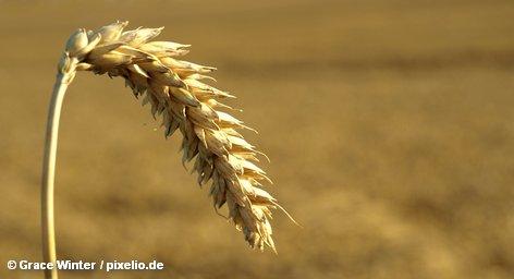 Всемирный совет по зерну получил первые данные о значительных потерях урожая в странах ЕС в […]