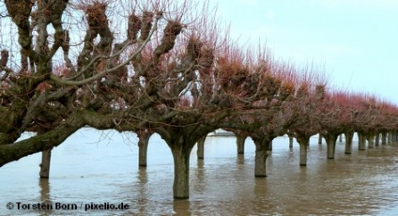 Вдоль течения Эльбы в регионе Пригниц, находящегося на северо-западе федеральной земли Бранденбург, с сегодняшнего утра […]