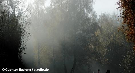 В дополнение к трем традиционным возобновляемым источникам энергии - солнце, ветер и вода – специалисты также рассматривают древесную биомассу в качестве еще одного возобновляемого ресурса и поставщика электричества. На этот источник энергии на берлинской «Зеленой неделе» проходящей в эти дни в столице Германии, обращает внимание немецкая Ассоциация индустрии жилья, отопления и питания (HKI).