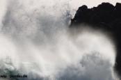 "Саамы большой ущерб ураган ""Ксавьер"" нанес колонии длинномордых тюленей."
